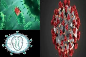 The most dangerous virus in the world