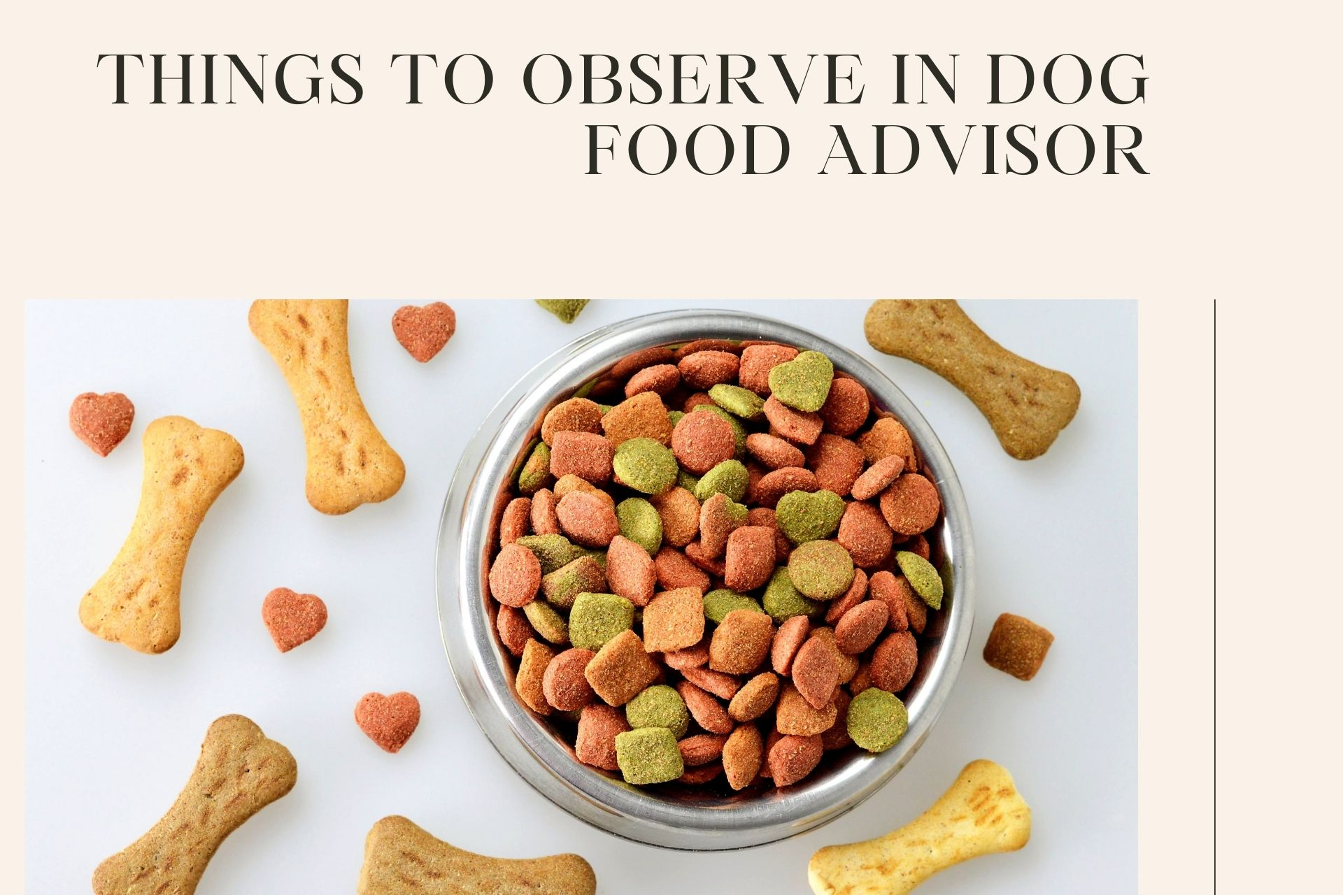 Important Things To Observe In Dog Food Advisor