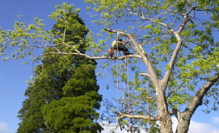 Why Hire an experienced Tree Services Enterprise?