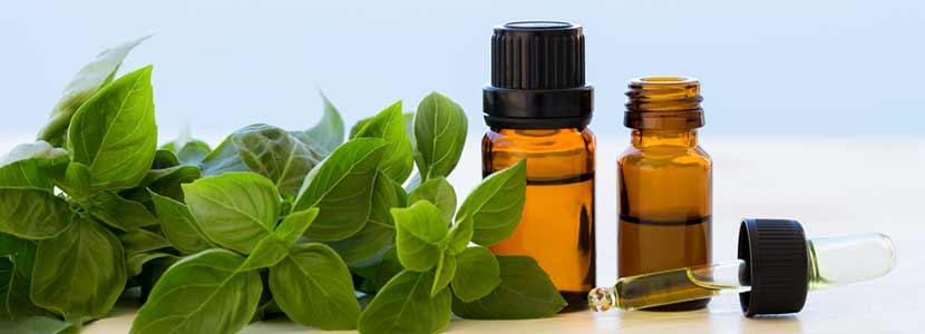 6 Amazing Health Benefits of Basil Oil